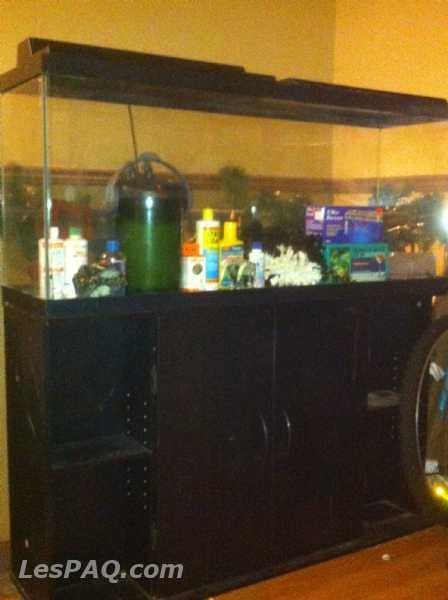 aquarium usag 233 224 vendre animaux poissons lespaq